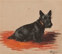 scottie dog by cecil charles windsor aldin