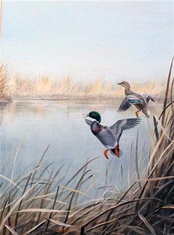 mallard taking flight by david morrison reid henry