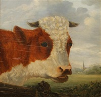 kop van een stier by jan bedijs tom
