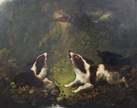 spaniels chasing a pheasant by edward armfield