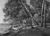 kiefernwald an der normandieküste by paulin andre bertrand
