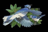 blue jays by jack francis smith