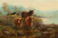 highland cattle by douglas cameron