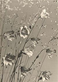 glockenblumen und ziergras. vintage by max baur