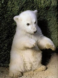 knut by oliver mark