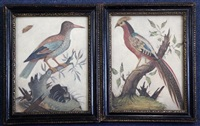 studies of exotic birds (2 works) by samuel dixon