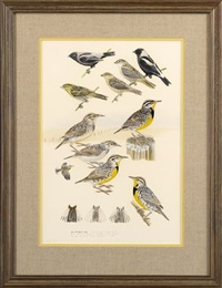bobolink and meadowlarks (from national geographic society's field guide to the birds of north america) by john p. o'neill