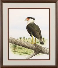 caracara falcon in the southwestern landscape by john p. o'neill