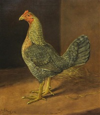 study of a cockerel by h. atkinson