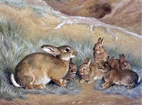 rabbit and young on a hillside by frank paton