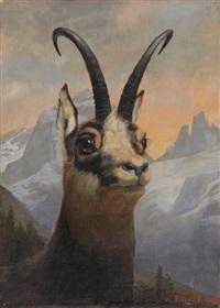 gemskopfporträt vor hochgebirgslandschaft by wilhelm amrhein