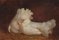 palomas by ricardo martí aguiló