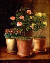 primula, lyserode roser og gule blomster i lerpotter på en karm by hanne brandt