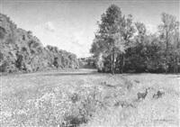sonniger maitag im schwarzwald, gengenbachtal pforzheim - stein by reinhard amtsbühler