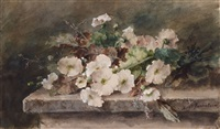 hollyhock stems on a stone table by margaretha roosenboom