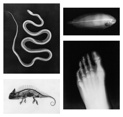 versuche über die photographie mittelst der röntgen'schen (portfolio of 15 w/ title and index) by josef maria eder and eduard valenta