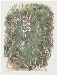 orchis à deux feuilles by robert hainard