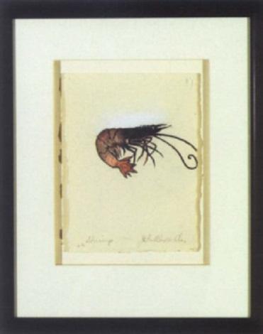 shrimp by john alexander