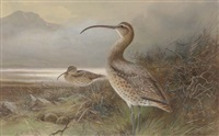 long-billed curlews by a lake by charles whymper