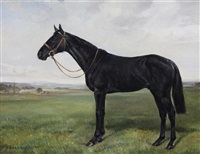 portrait of a black horse in a field by h. harris