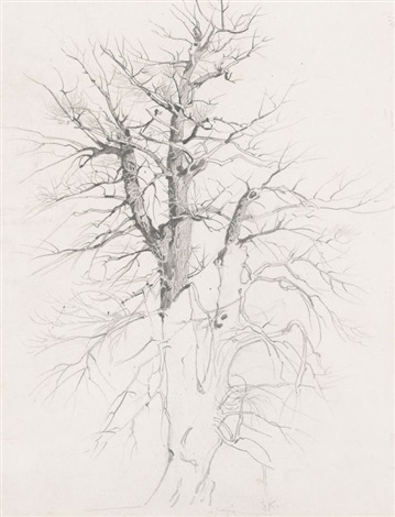 im söcking baum study verso by ernst kreidolf