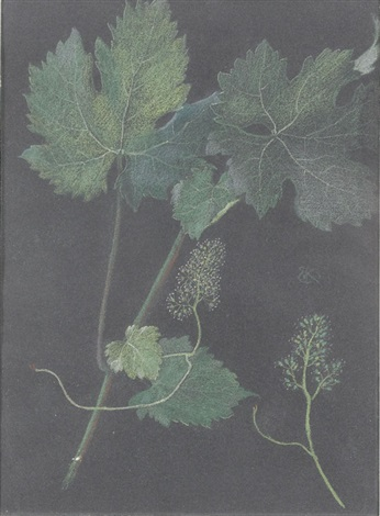 weinblatt by ernst kreidolf