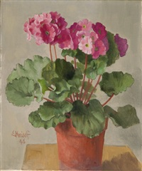 geranium by ernst kreidolf