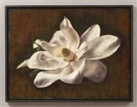 magnolia bloom by maggie hasbrouck