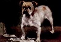 portrait eines bull terriers by camilla zach-dorn
