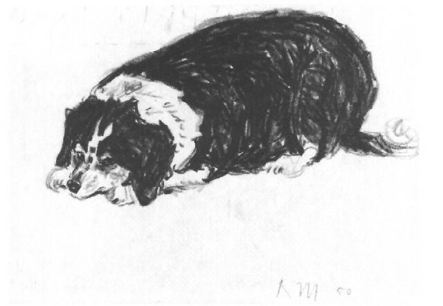 Liegender Schwarz Weisser Hund By Walter Rudolf Mumprecht On Artnet