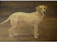 poacher, a golden labrador by frances mabel hollams