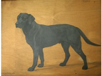 flick, a black labrador by frances mabel hollams