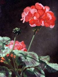 pelegonian blooms by norman macbeth