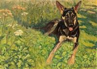 deutscher schäferhund by erwin aichele