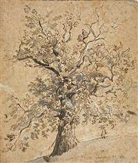 baum (study) by johann christian ziegler