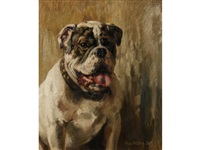 engl. bulldogge by renz waller