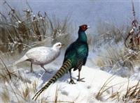 pheasants in winter by john cyril harrison