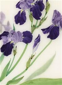 鸢尾迎春 (iris) by liu yong