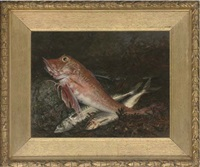 a gurnard and two mackerel on a rock, with seaweed to the side by j. anderson