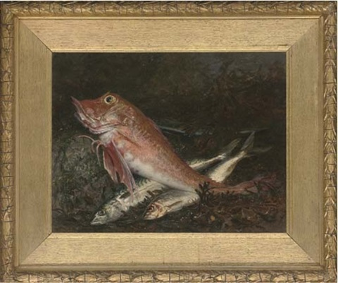 a gurnard and two mackerel on a rock with seaweed to the side by j anderson