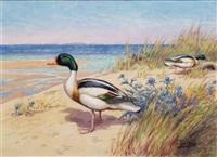 tadornes sur la plage by joseph oberthür