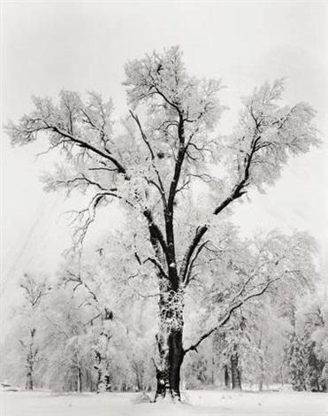oaktree snowstorm yosemite national park california by ansel adams