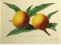 peaches on a branch by alfred riocreux