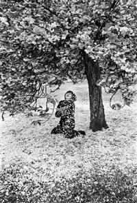 cerisiers japonais by edouard boubat