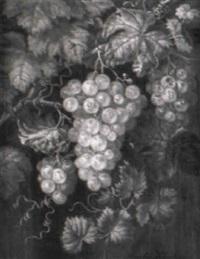weinstock mit weißen trauben by amalie kaercher
