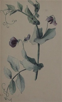 sweet peas and narcissi (2 works) by gérard van spaendonck