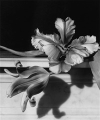 tulips on marble by horst p. horst