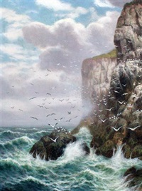 gulls on sea cliffs by alex mortimer
