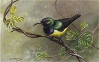 yellow-bellied sunbird (+ 2 others; 3 works) by george morrison reid henry