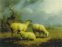 drei schafe by friedrich wilhelm pfeiffer